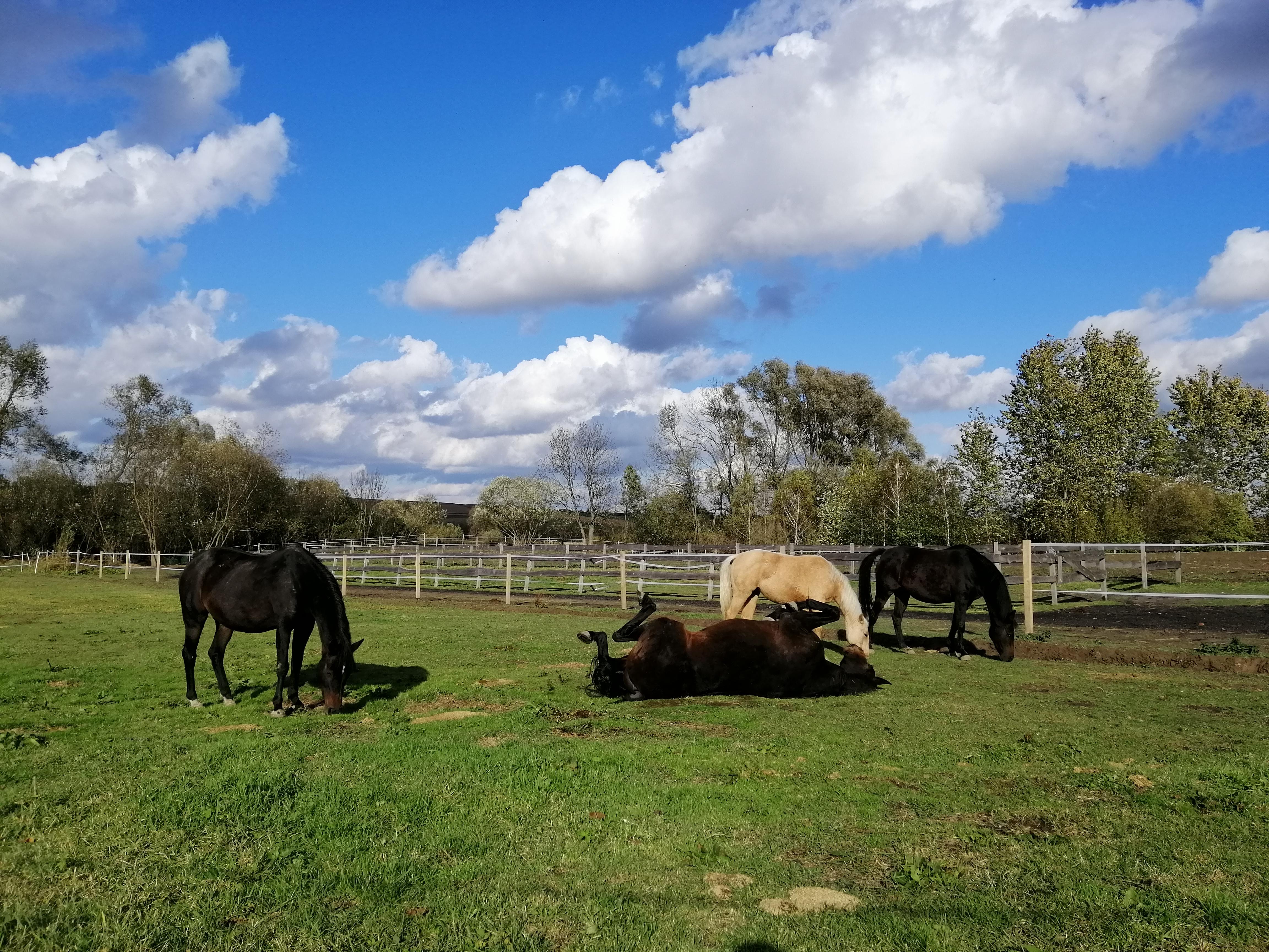 natura fizjoterapia koni manualna terapia konie Lubelskie natura jazdy konne jazda w terenie dornter