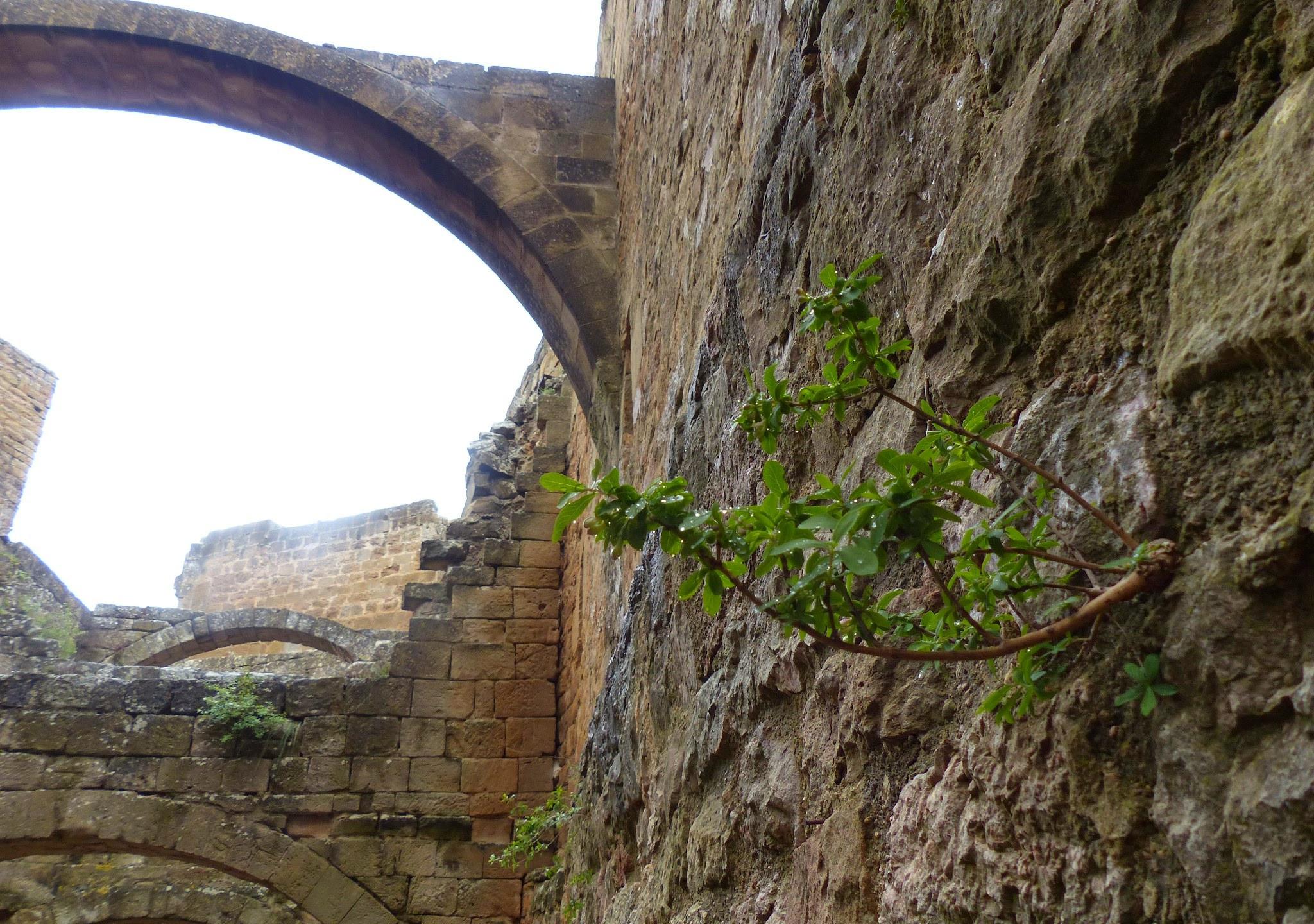 Castillo de Loarre - 83