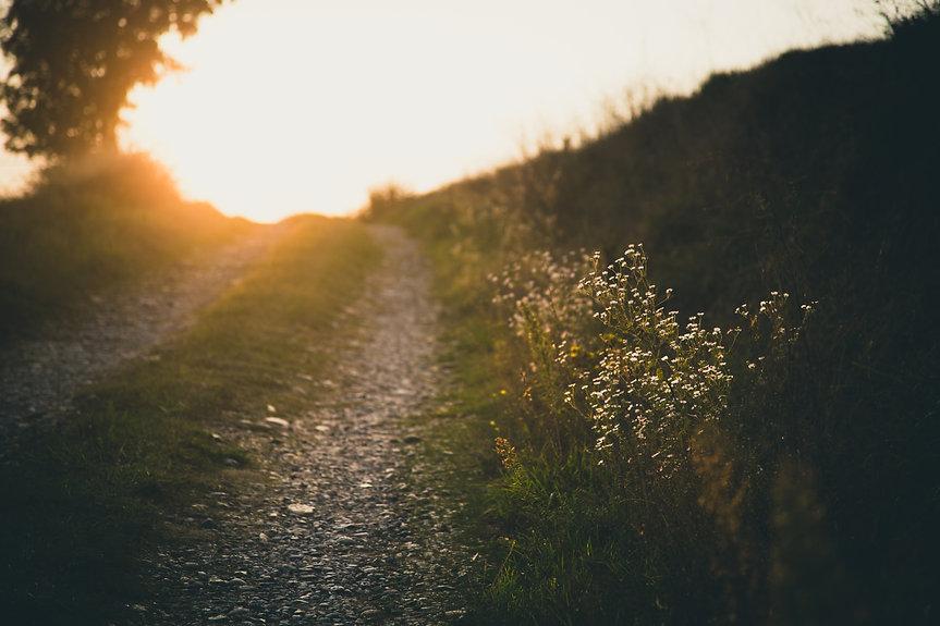 francesco-gallarotti-nature path.jpg