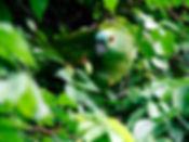 nature-1284229_edited.jpg