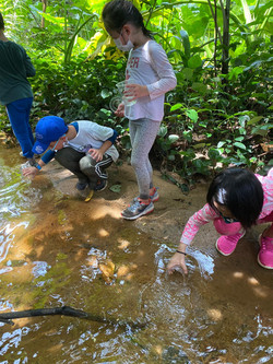 Exploring natural streams