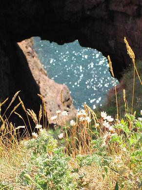 seaton cliffs nature reserve