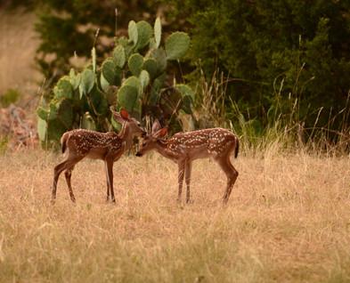 Wildlife just outside your door