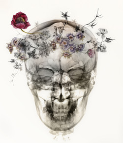 flower skull 1 closeup