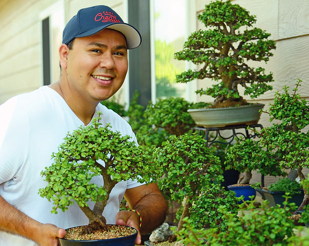 Gilbert Cantu Little Jade Bonsai picture