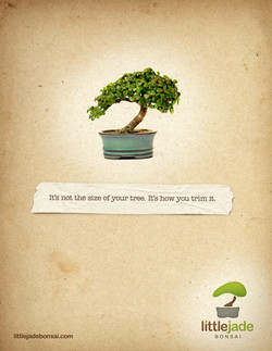 Ad design for Little Jade Bonsai