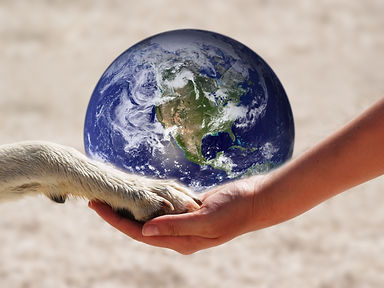 the world in our hand 2 (human and anima