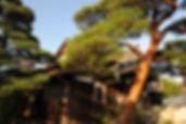 赤松8028.jpg