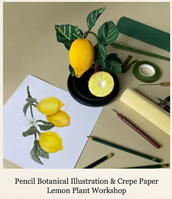 Pencil botanical illustration and crepe paper lemon plant workshop