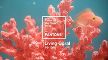 Pantone colour of 2019 - Living Coral
