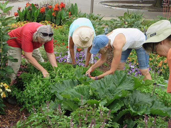 Nebraska Extension Master Gardener Volunteer Program
