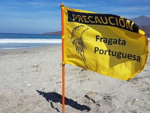 SALUD LLAMA A ACTUAR CON PRECAUCIÓN ANTE LA PRESENCIA DE LA FRAGATA PORTUGUESA