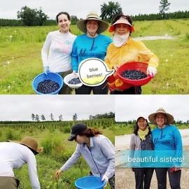 Picking blueberries at organic farm