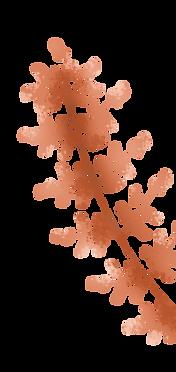 plante-fleur-orange.png