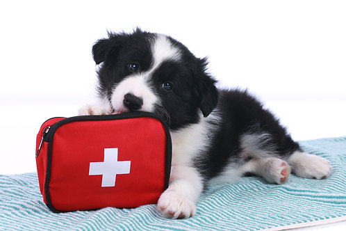 Canine CPR & Basic First Aid