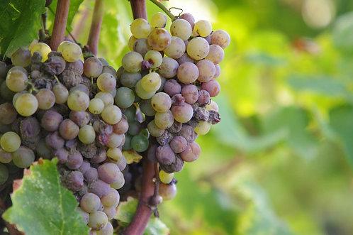 Wine Tasting Kit 12 month+ 1 Free Dom Perignon + 1 Free month suscription