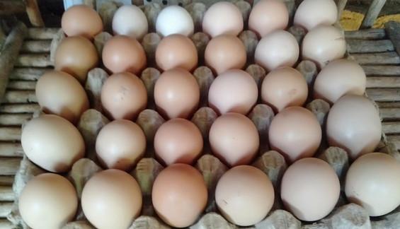 Auch die Eier können regelmäßig verkauft werden