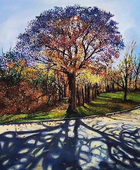 Tree at Schramm Park