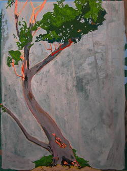 Tree For The Forest- Madrone