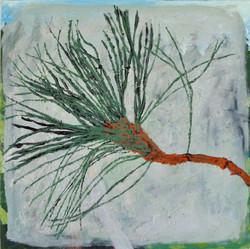 Tree for the Forest-Pine Needle