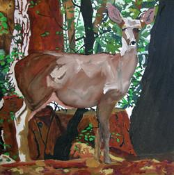 Deer in the driveway #2