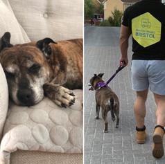 Tess the van dog