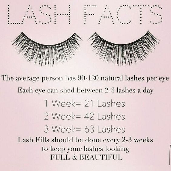 lash facts
