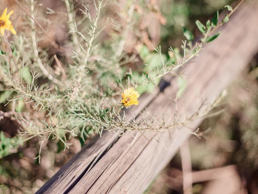 Cowles Mountain (Cali Trip 1/4) // Travel