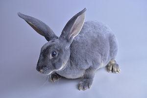 Bunny Bluebell.JPG