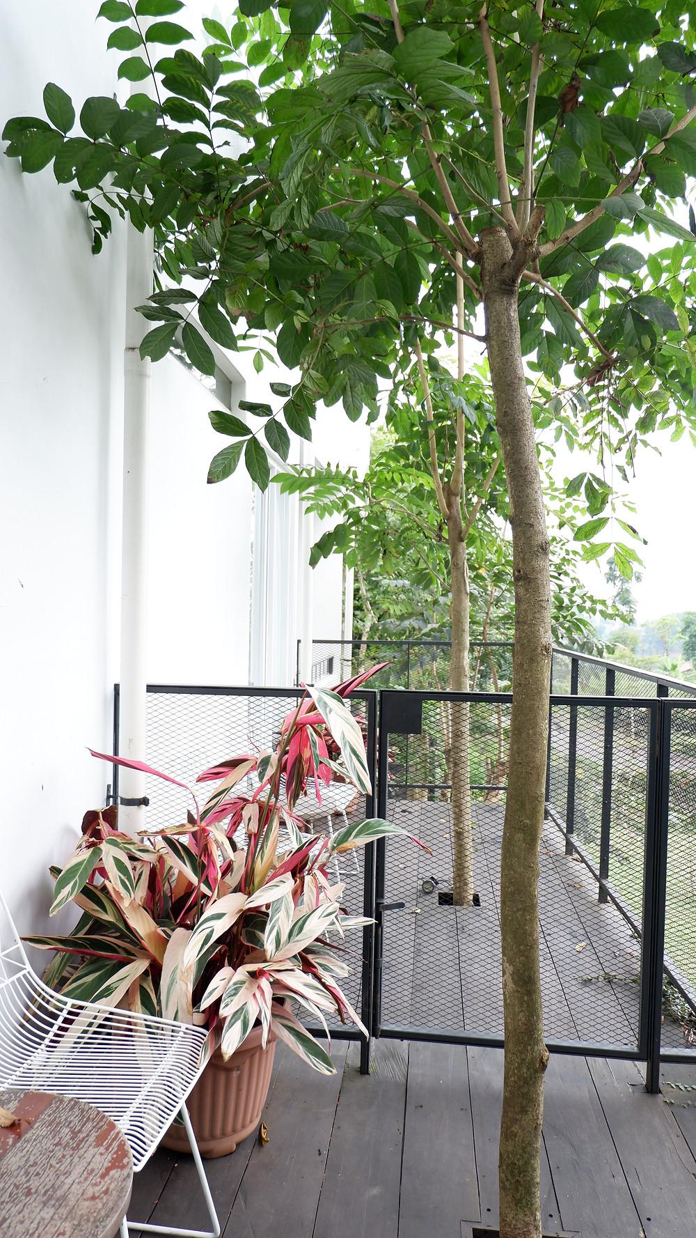 Balkon dengan Dek Kayu. (Picture : K+AD Firma Arsitektur)