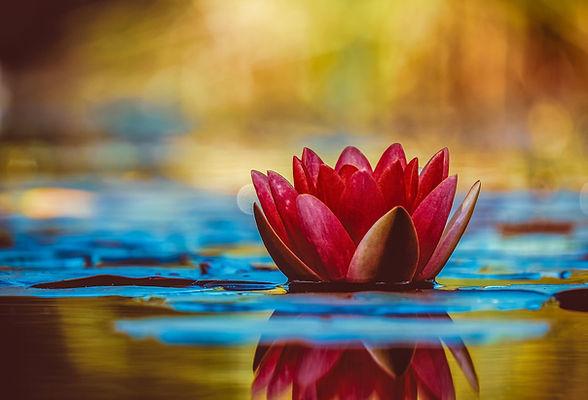 Fleur de lotus or.jpg