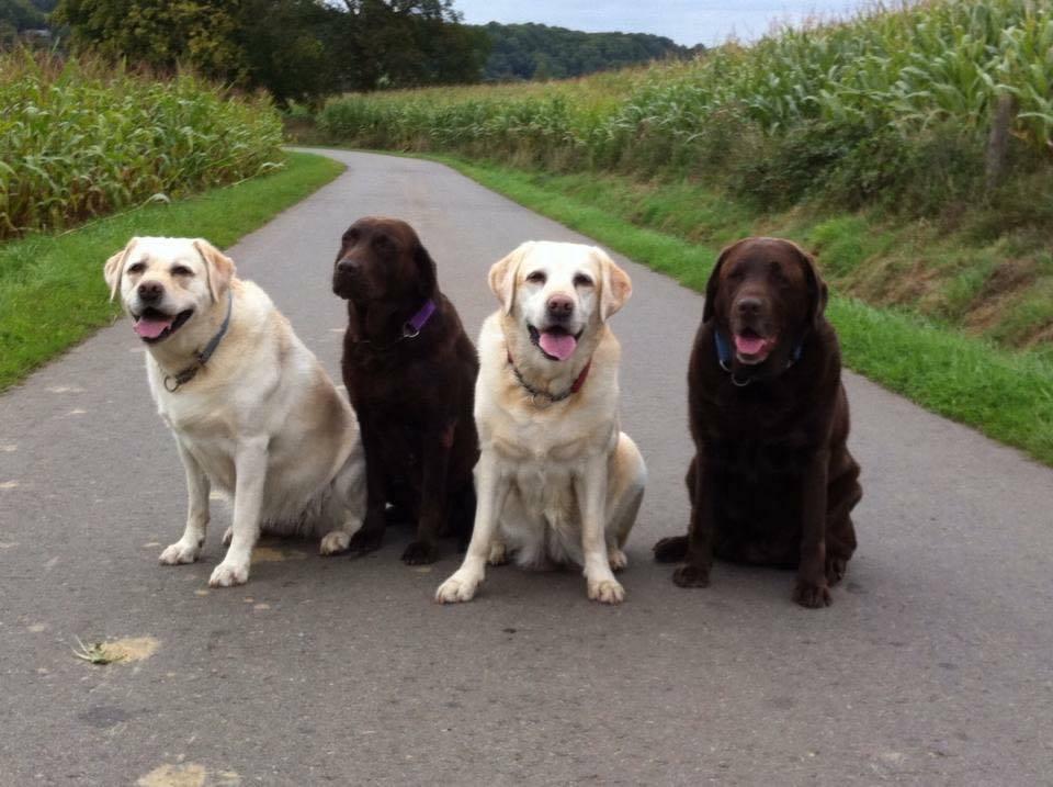 meerdere honden welkom