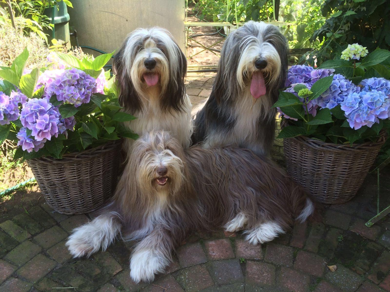 3 honden welkom