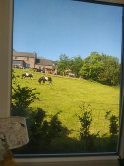 uitzicht vanaf eethoek paardjes