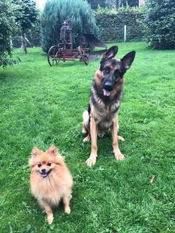 2 honden welk ,meerdere alleen in overleg