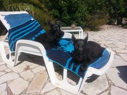2 honden welkom
