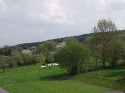 blanche uitzicht vanuit de tuin op koeie