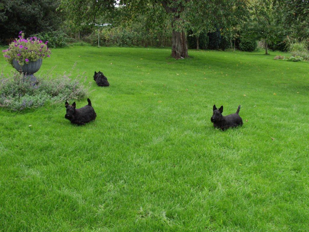 honden welkom tuin is geheel omheindP9196591 - kopie