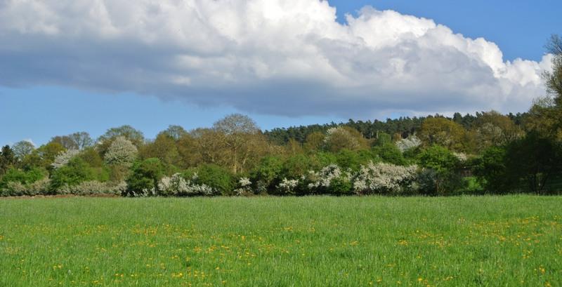 lente zicht op heyd