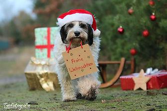 FlockeWeihnachten.jpg