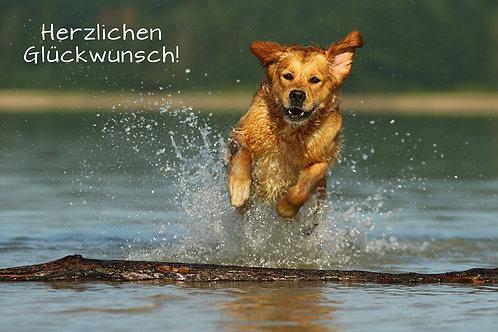 """Geburtstagskarte """"Hund im Wasser"""""""