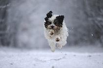 meine Schnee-Flocke