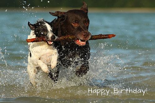 "Geburtstagskarte ""Hundefreunde"""
