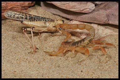 example of predator prey relationship in the desert