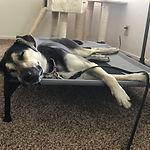 Dog Trainer, Reno, dog training reno, dog facility, Ideal k9