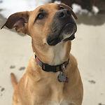 Ideal Canine, Reno dog trainers, dog training, balanced dog training, board and train, rehabilitation
