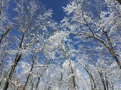 Winter Woods-Paul Micarelli