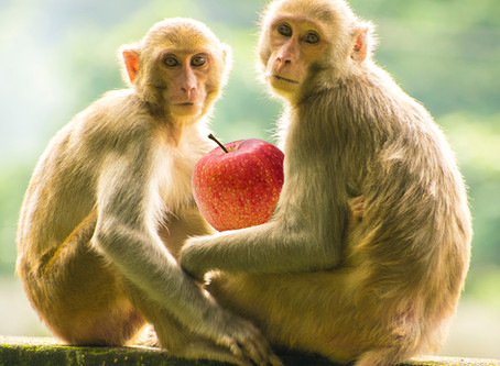 BREAKING: Science reveals that Adam and Eve were monkeys.