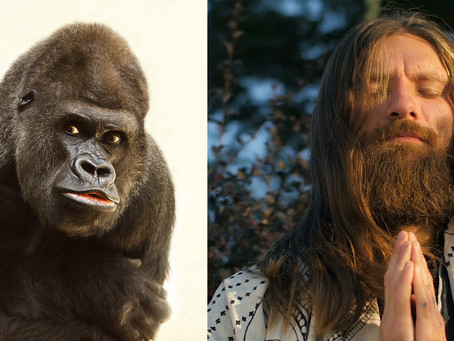 BREAKING: Science proves Apes and Jesus share a common ancestor.