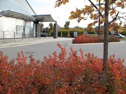 Pittsfield Branch fall parking lot